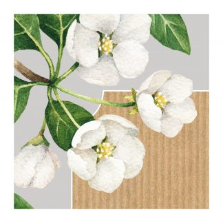 botanicals flowers white