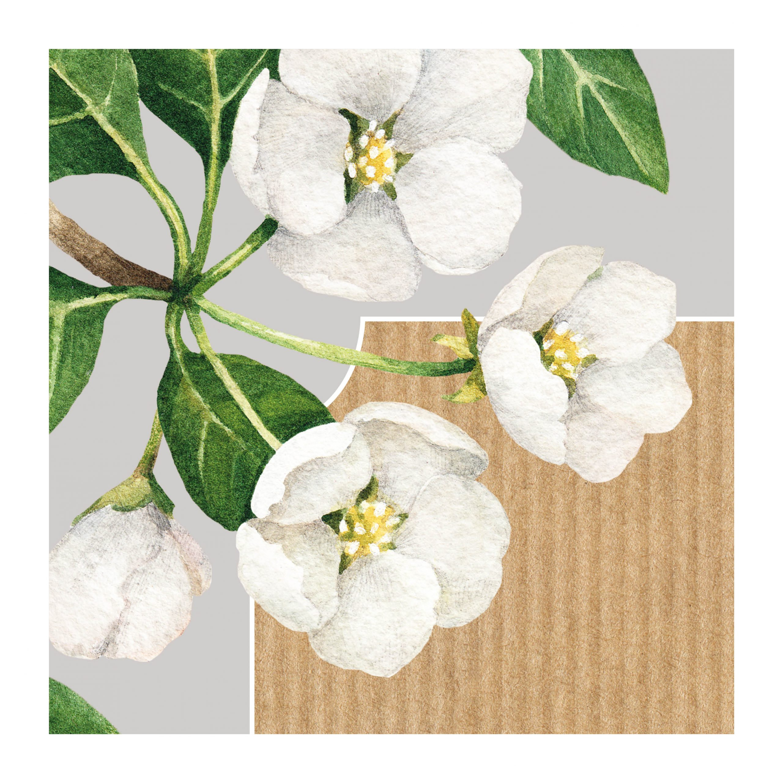 botanicals flowers white