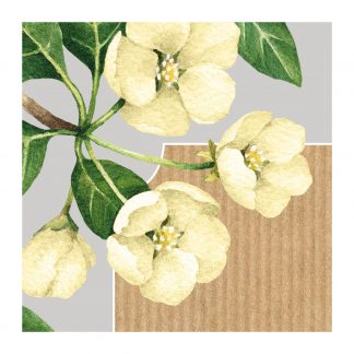 botanicals flowers yellow