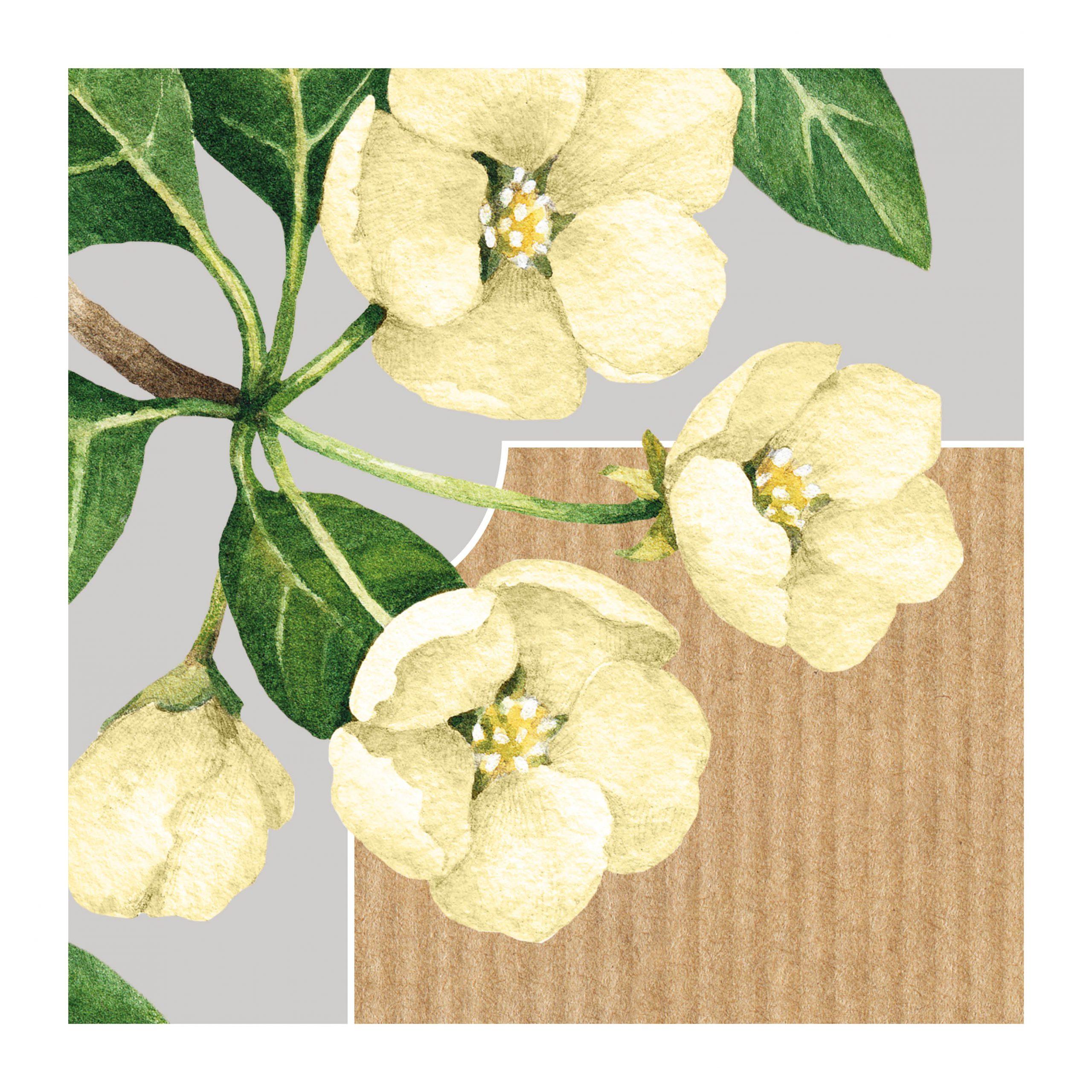 botanicals flowers yellow